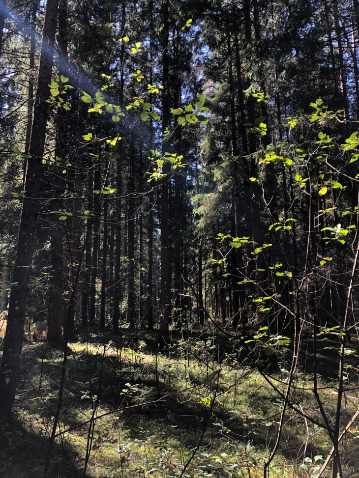 Bain de forêt, les bienfaits de la sylvothérapie