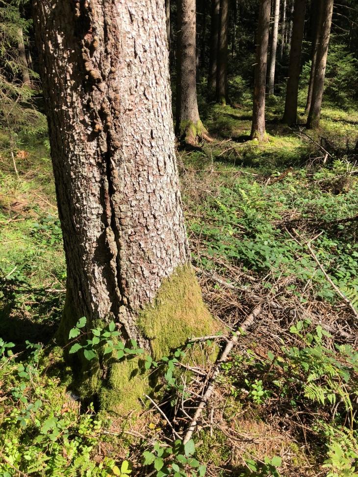 Les arbres, la sylvothérapie, le bain de forêt
