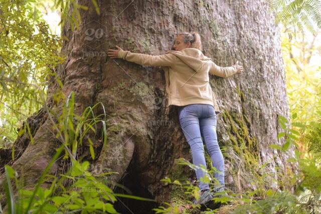 Sylvothérapie. L'art de serrer les arbres !
