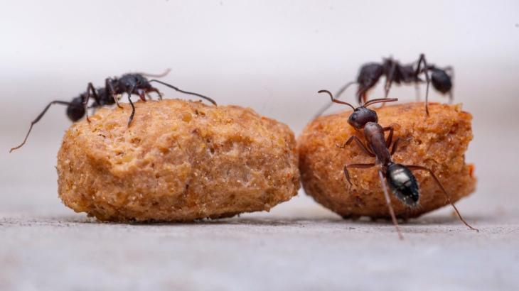 La fourmi. Histoire de persévérance et réussite